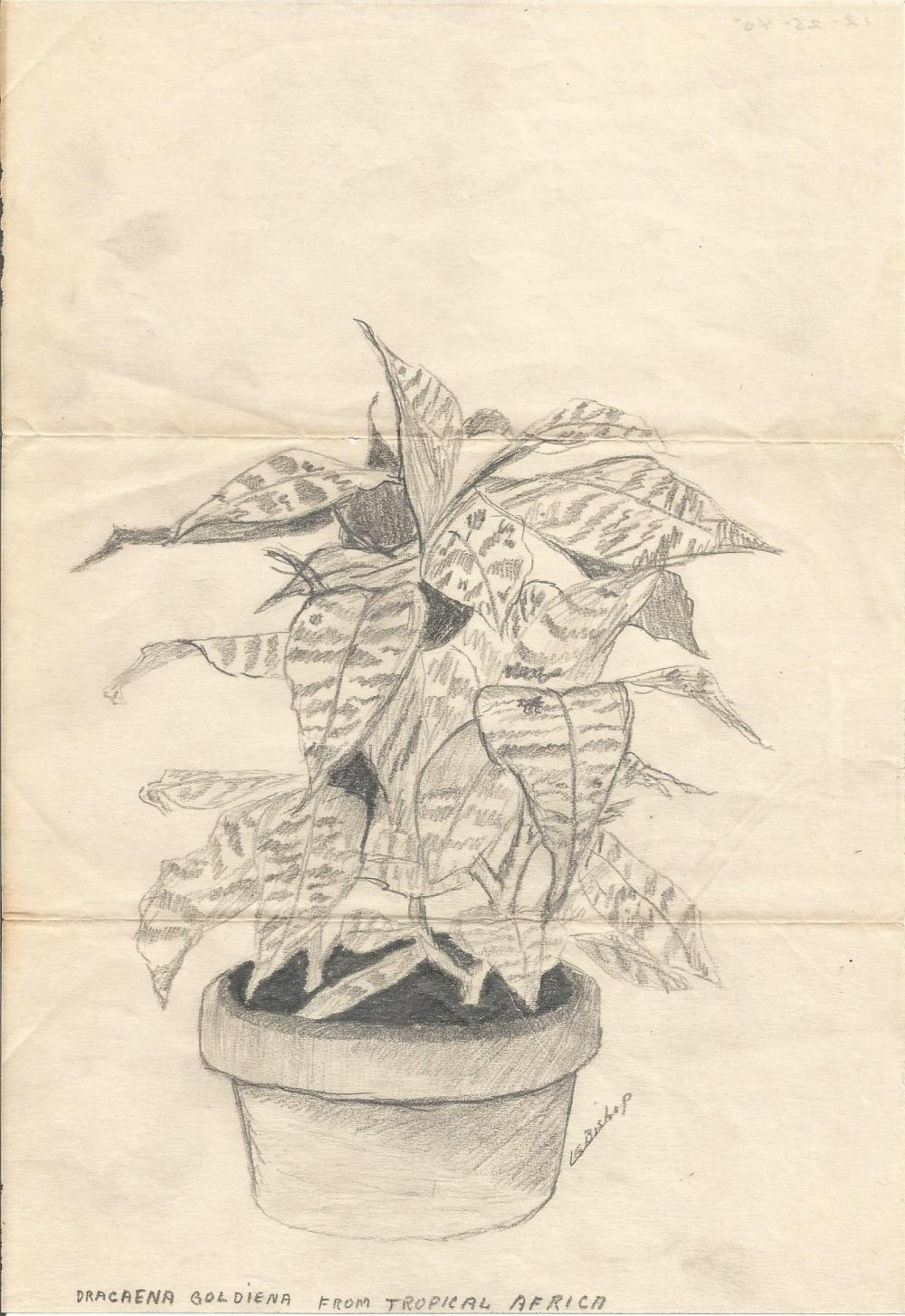Tropical Plant LGBishop